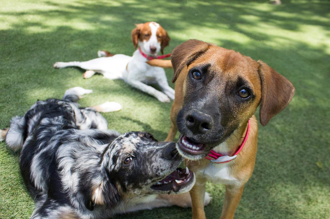 Otis, Winnie, & Sadie in Puppy Play