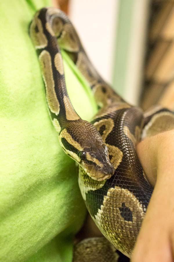 Ogun the Snake