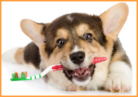 image of dog with toothbrush