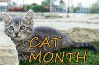 BloomingPaws Cat Month feature